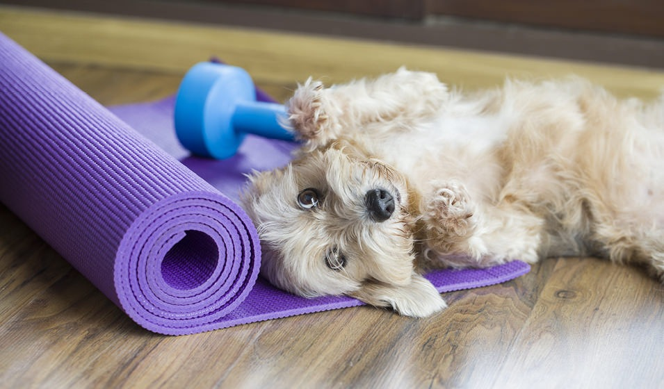 Lifestyle Image Of Puppy  on Yoga Mat