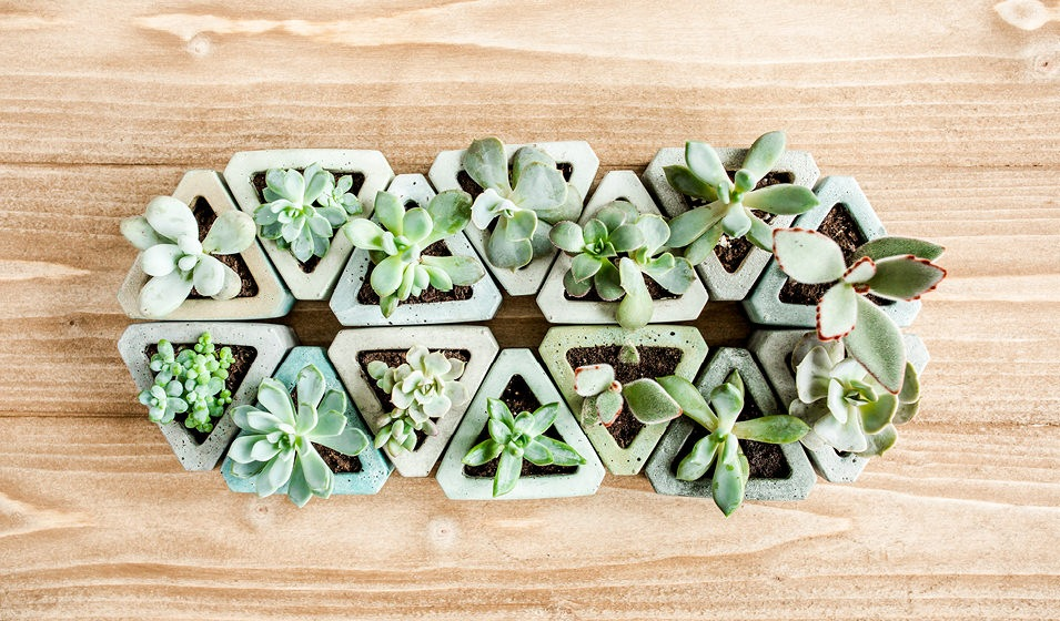 overhead shot of succulents in triangle pots placed together to form geometric pattern on table