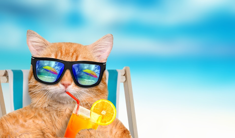 calico cat in sunglasses, sitting on a beach chair while sipping on a straw in a cup of iced tea