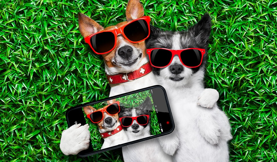 two pups laying on the grass, holding an iphone with an image of them on it