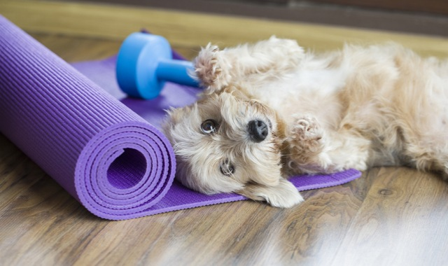 Puppy with yoga mat and dumbbell