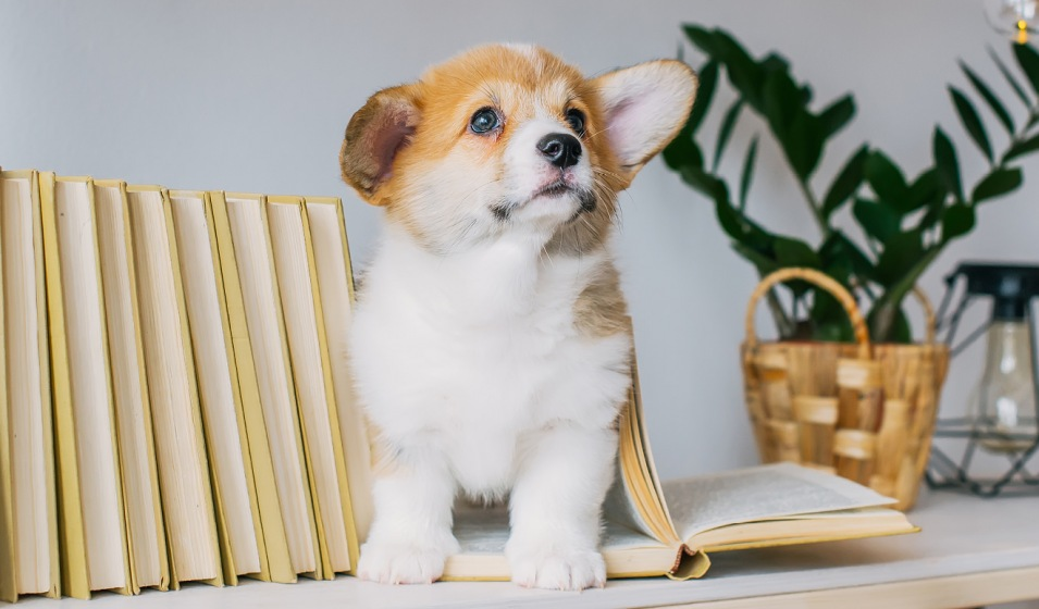 puppy on a minimally decorated shelf
