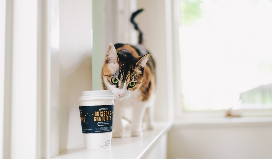 cat on a ledge looking curiously at cup of coffee with lid