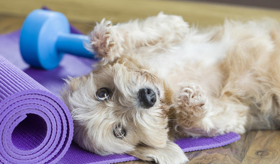 Lifestyle Image of a Puppy and Yoga Mat