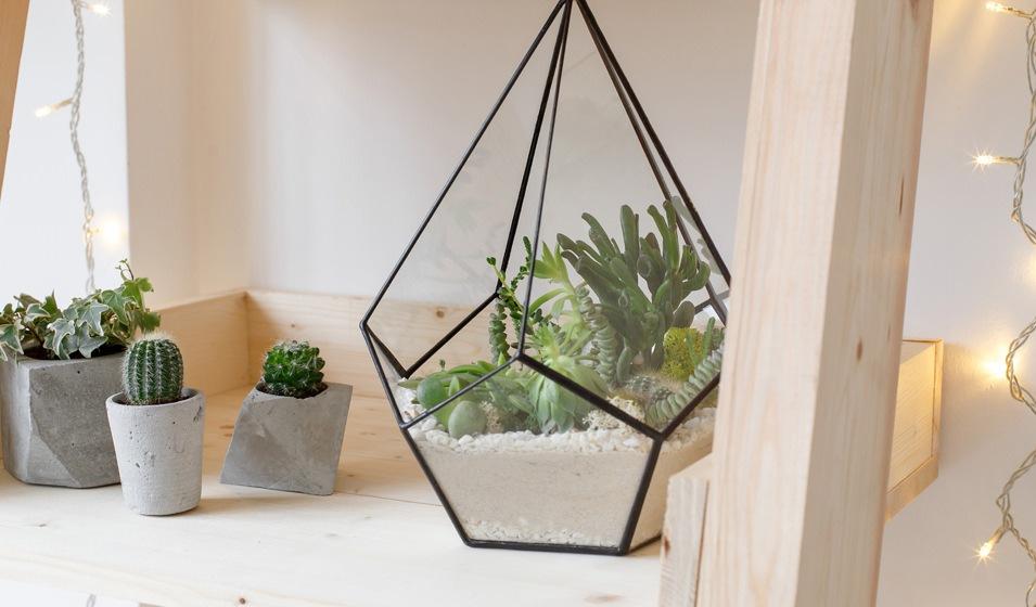 Lifestyle Image Of Plants Near a Window