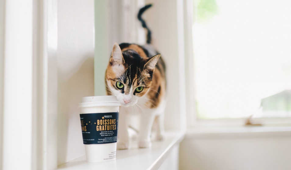 Lifestyle Image Of a Cute Cat on a Window Sill