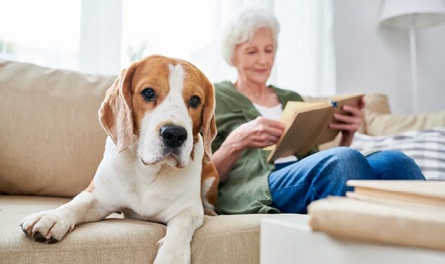 dog lays on couch with elderly woman whose reading