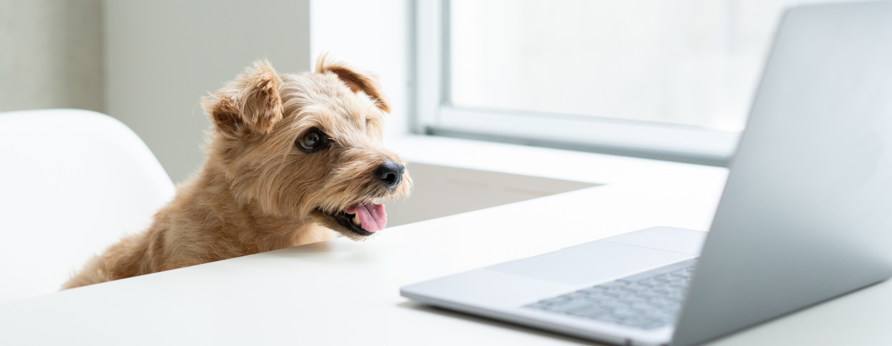 Dog at laptop