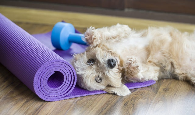 dog laying on a yoga mat with a free weight behind it